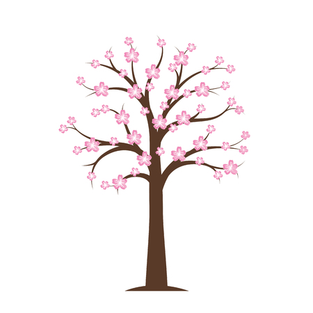 pink blooming cherry tree in spring on white background vector illustration EPS10