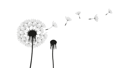 dandelion silhouette with flying seeds isolated on white background vector illustration EPS10 Иллюстрация