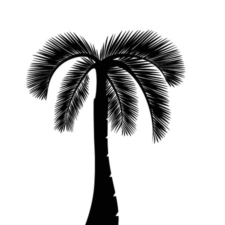 palm tree silhouette isolated on white background vector illustration EPS10