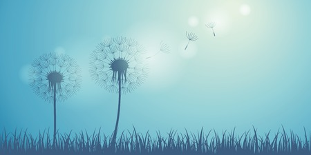 dandelion silhouette on blue background with flying seeds vector illustration EPS10