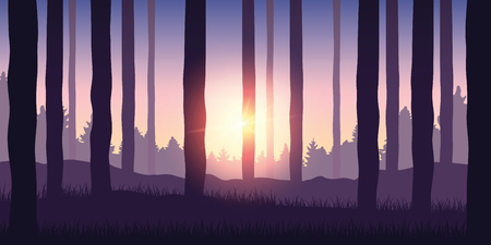 purple forest nature landscape backgound with sunshine vector illustration EPS10
