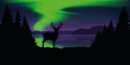 reindeer by the lake with beautiful green polar lights wildlife nature landscape vector illustration EPS10 Ilustração