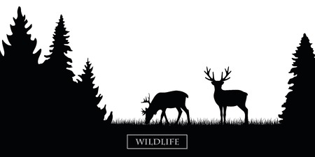 two wildlife reindeer silhouette in the forest on the meadow black and white vector illustration EPS10