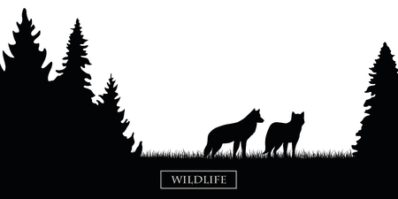 two wildlife wolves silhouette in the forest on the meadow black and white vector illustration EPS10