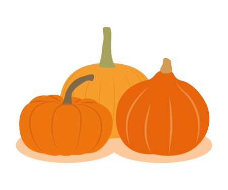 three different pumpkins isolated on white background vector illustration EPS10