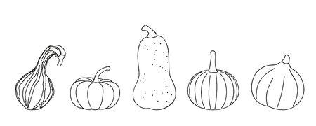 pumpkin different sorts outline on white background vector illustration EPS10