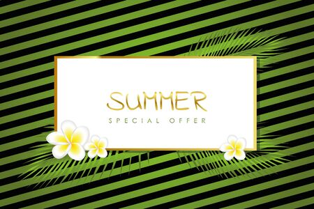 summer special offer green striped card with gold border palm leaf and frangipani flower vector illustration EPS10