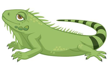 Iguana cartoon illustration on white background.