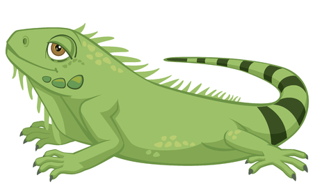 Iguana cartoon illustration on white background.
