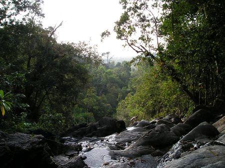 熱帯雨林のストリーム 写真素材