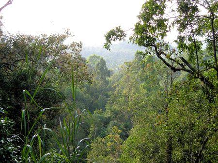 熱帯雨林 写真素材 - 5988943