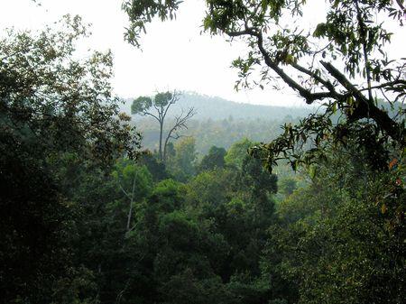 熱帯雨林 写真素材 - 5988939