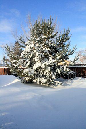 ツリー上の雪します。