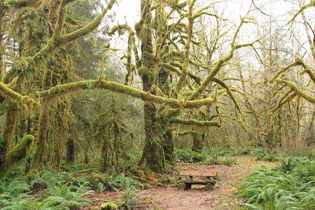 苔の森 写真素材 - 6756242