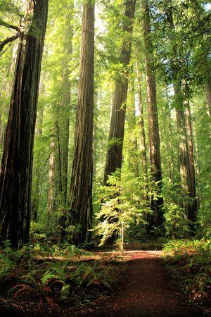 森林歩道 写真素材 - 6756241
