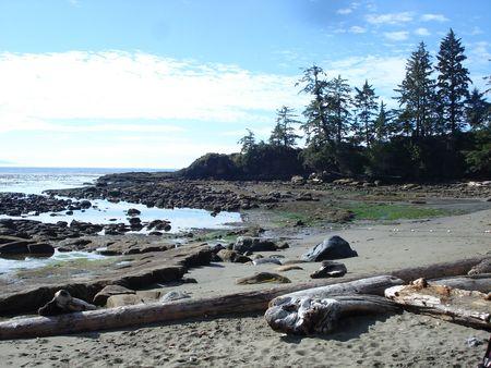漂流木海岸ビーチ
