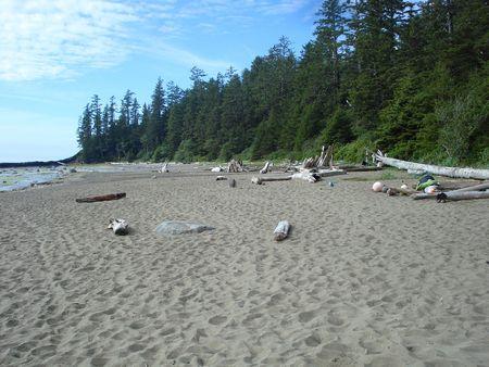 白砂のビーチで流木の上に敷設