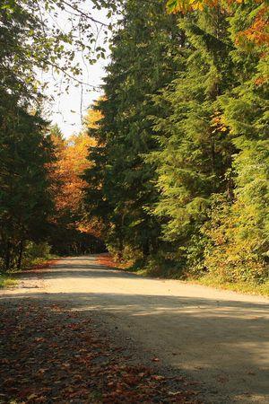 道路を介して巻き秋色木