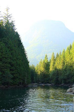 山湖のほとりに木 写真素材