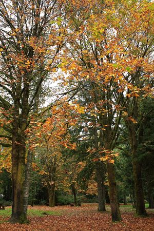 秋の森の木
