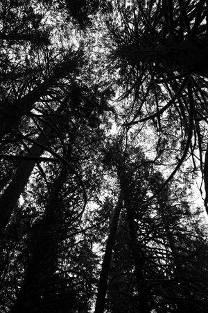 looking up between trees