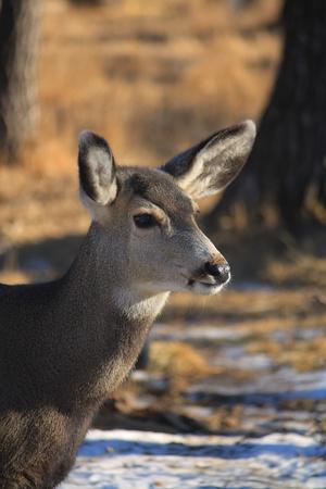 野生の鹿 写真素材