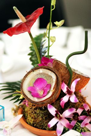 themed: a colorful coconut centerpiece at a tropical themed party