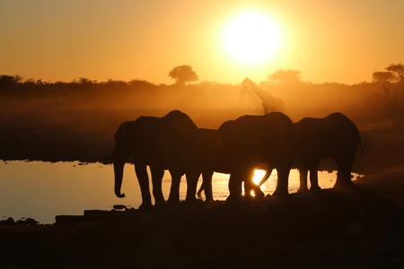 waterhole: la puesta del sol en la charca