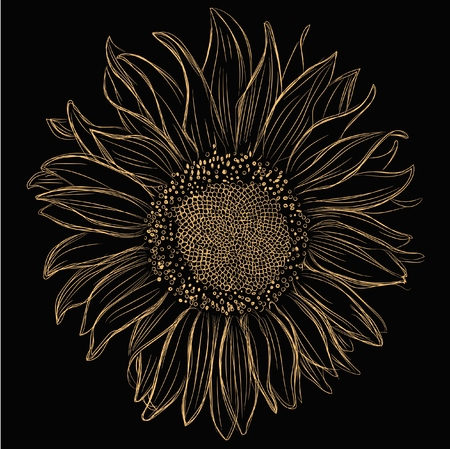 sunflower isolated: Yellow hand drawn sunflower isolated on black