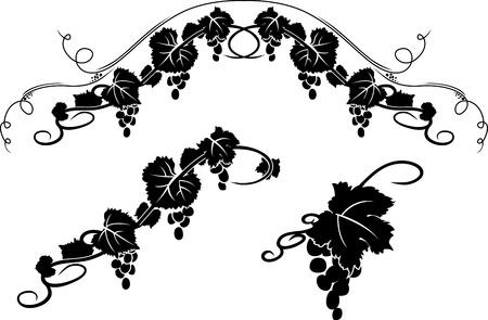 vid: Grape los elementos decorativos plantilla conjunto