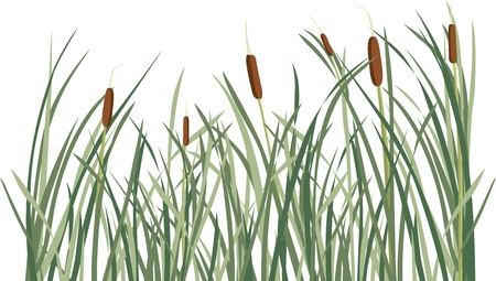 Reed and green grass background illustration for design