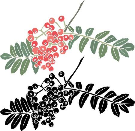 Vogelbeere: Vogelbeere Zweig Schablone Illustration