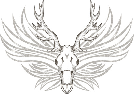 black buck: Deer skull with horns on background of wings, vector graphic style Illustration