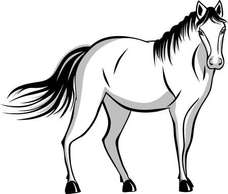 quietly: Quietly standing horse. black and gray color