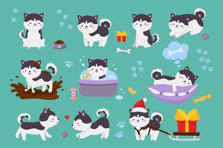 Vector set of cute Siberian husky dogs. Kawaii cartoon character puppy is jump in muddy puddle, washing, playing ball, sleeping on pillow. Christmas dog with sleigh and gift. Illustration for kids. Illustration