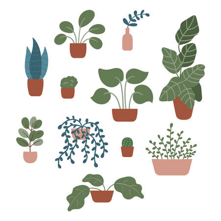 Hand drawn doodle plants in pots and vases on isolated background. Tropical and exotic flowers, vines, cactus and branches. Vector elements for cozy interior.