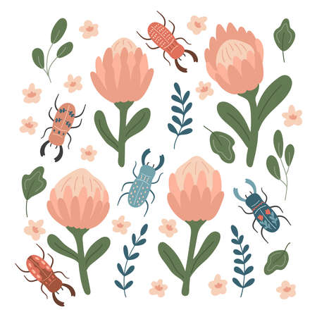 Hand drawn protea and stylized stag beetles. Doodle insects, leaves and flowers. Spring vector illustration.