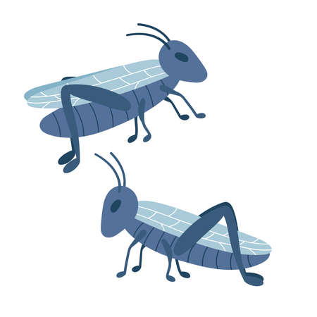 Hand drawn doodle grasshoppers. Stylized insects on white background. Vector illustration. 일러스트