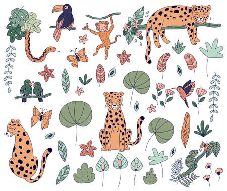 Vector set of jungle animals. Hand drawn doodle leopards, toucan, snake, monkey, parrots and chameleon. Tropical exotic plants and flowers. Line illustrations ideal for t-shirts and stickers. Illustration