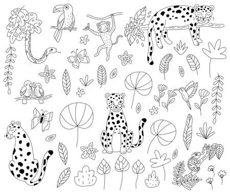 Vector set of jungle animals for coloring book. Hand drawn doodle leopards, toucan, snake, monkey, parrots and chameleon. Outline exotic plants and flowers. Black and white illustration for kids.