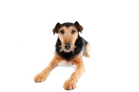 dogie: dog