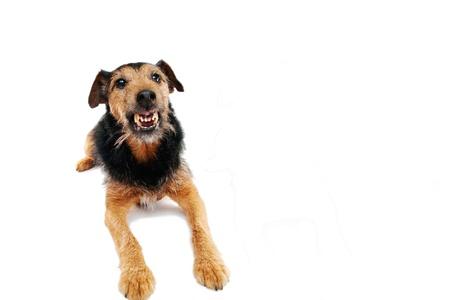 feindschaft: Angry Hund  Lizenzfreie Bilder
