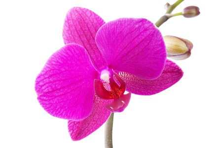 orchid Stock Photo - 9561024
