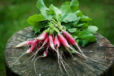 Fresh radishes  on the stump