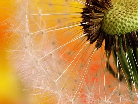 Dandelion on colourfull background photo