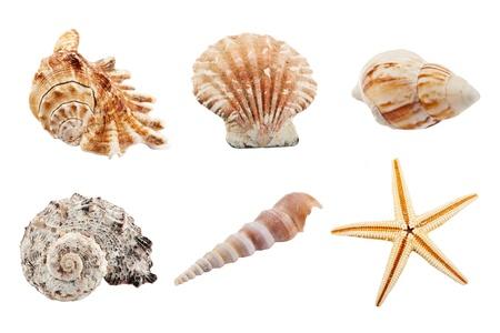 salyangoz: Set of sea shells Stok Fotoğraf