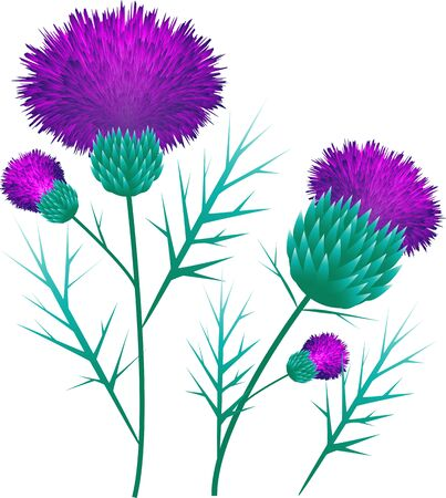 Thistle collage vector illustration pink purple