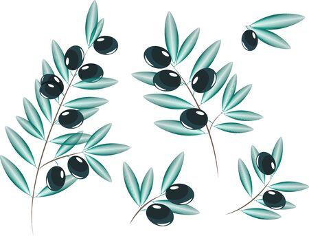 olive branch tree olive vector lines elegant black olive collage
