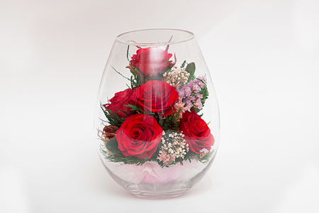 red roses in a vacuum