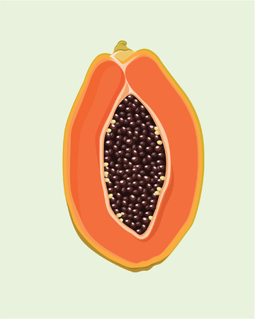 papaya tropical fruit vector illustration